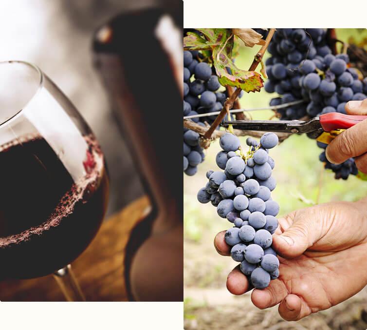 wine tasting in Tavarnelle val di Pesa